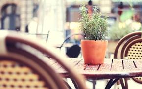 Обои Tea-garden, street, after rain, плетёные, уличное, wicker chairs, столик, city, дождя, после, город, tilt-shift, цветочный, ...
