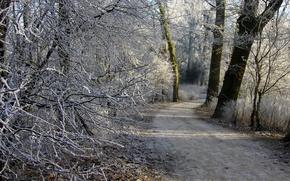 Картинка иней, лес, Зима, тропинка