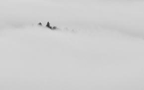 Картинка лес, туман, фон
