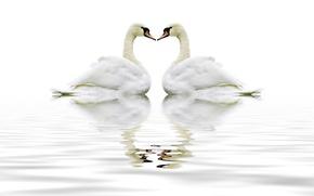 Картинка animal, swam, gental