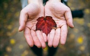 Картинка осень, лист, руки