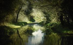 Обои тень, природа, лето, деревья, трава, река, берега