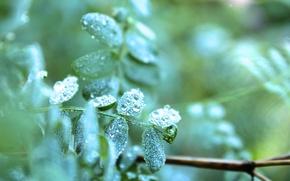 Картинка лето, листья, капли, макро, роса, растения, утро