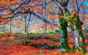 Картинка осень, лес, листья, деревья, мох, склон