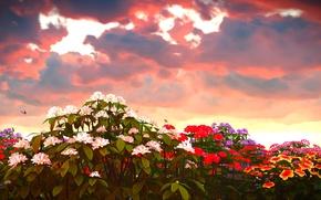Картинка небо, облака, бабочки, цветы, зарево, разноцветные, флоксы