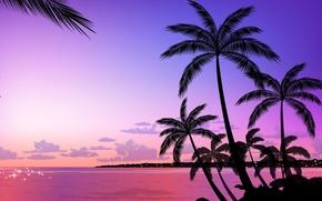 Картинка пальмы, вектор, вечер
