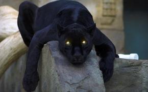 Обои кошка, panther, глаза, чёрная, пантера
