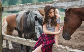 Картинка девушка, рука, лошади, прикосновение