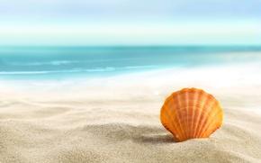 Обои seashell, sand, beach, пляж, лето, море, солнце