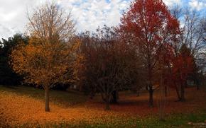 Картинка осень, деревья, листва, colors, trees, leaves, Autumn fall