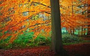 Картинка осень, лес, листья, дерево, кусты