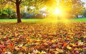 Картинка осень, листья, солнце, деревья, пейзаж, природа, ярко, золотая
