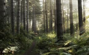 Картинка лес, утро, дорожка