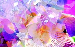 Обои цветы, природа, рендеринг, растение, лепестки