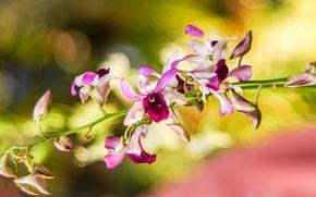 Картинка макро, цветы, размытость, орхидеи, разноцветные, обои от lolita777