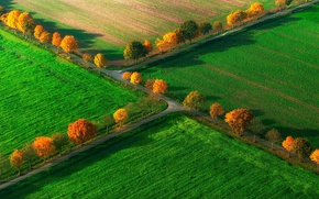 Картинка поле, осень, деревья, Германия, Северный Рейн-Вестфалия, Ноттульн