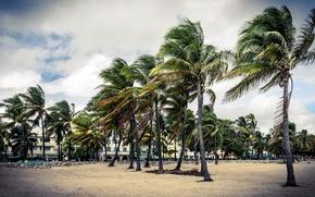 Картинка песок, небо, дом, парк, пальма, пальмы, люди, здание, облако, арт, house, beach, сша, sky, cloud, …