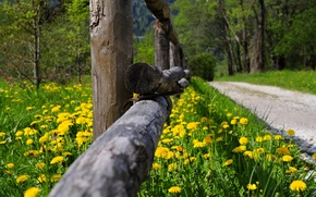 Обои nature, grass, flowers, spring, forest, park, trees, road, path, walk