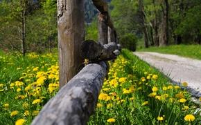 Картинка дорога, лес, трава, деревья, цветы, природа, парк, весна, grass, forest, road, trees, nature, park, flowers, ...