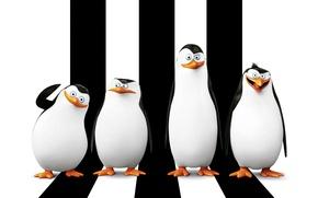 Картинка Рико, Skipper, Kowalski, мультфильм, Corporal, Classified, Ковальски, Пингвины Мадагаскара, Прапор, Шкипер, Penguins of Madagascar