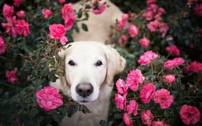 Картинка взгляд, цветы, друг, собака