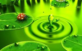 Обои зеленый, жук, Капля