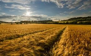 Картинка небо, поле, природа, лето, золотое, колоски