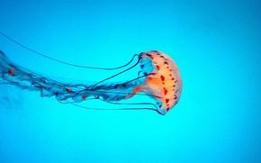 Картинка медузы, щупальца, танцы, морское дно