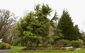 Картинка деревья, парк, камни, газон, сад, США, кусты, Oregon Gardens, Silverton