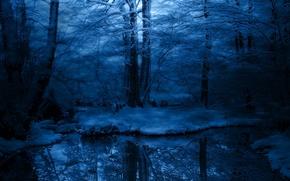 Обои холод, снег, зима, иней, деревья, синий