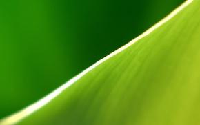 Обои край, лист, зеленый, полоса