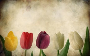 Обои цветы, Гранж, бумага, тюльпан, тюльпаны, текстуры