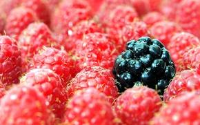 Картинка ягоды, малина, ежевика