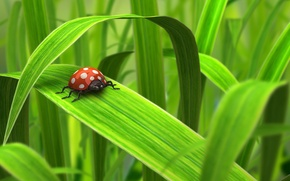 Обои жук, зелень, Робот