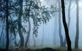 Картинка осень, деревья, ветки, природа, туман, роса, утро, дымка