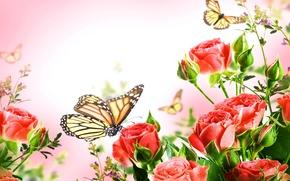 Обои бабочки, фон, красные, куст, крупным планом, розы