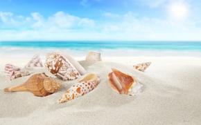 Картинка sea, sand, sand beach, seashells