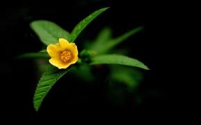 Картинка цветы, природа, жёлтый
