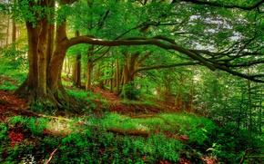 Картинка лес, деревья, склон