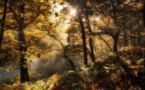 Картинка осень, лес, свет, папоротник