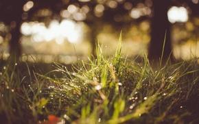 Обои роса, трава, капли