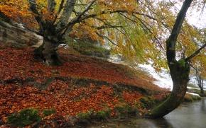 Картинка осень, снег, деревья, река, берег