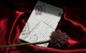 Картинка цветок, письмо, фон