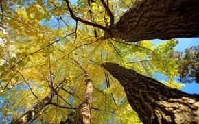 Картинка осень, небо, листья, деревья, ствол, крона