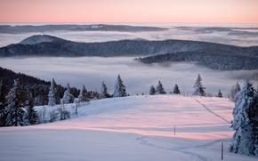 Обои утро, горы, спокойствие, дерево, дымка, красивые места, туманы, красотища, зимняя природа, тишина, леса, гора, снег, ...
