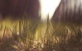 Картинка трава, солнце, макро, природа, блики, земля, macro
