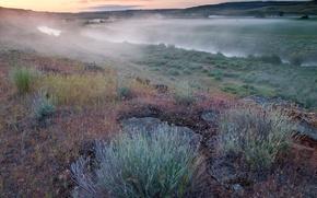 Обои туман, река, трава, Утро, поле