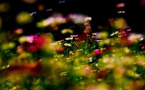 Картинка лес, цветок, трава, цветы, парк, сад