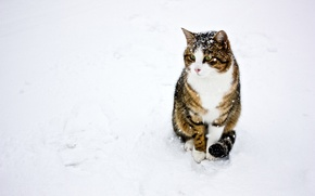 Обои зима, кошка, кот, снег