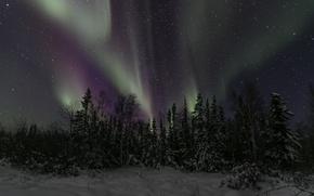 Обои Северная Канада, ночь, небо, зима, северное сияние, деревья, звезды